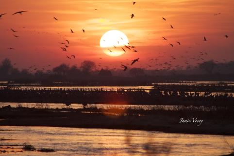 crane-sunset-middle-sun-raw-jamie-vesay-wm-32415-img_6800