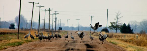 cropped-crane-dance-on-road-trd-crp-jamie-vesay-img_6565-version-3.jpg